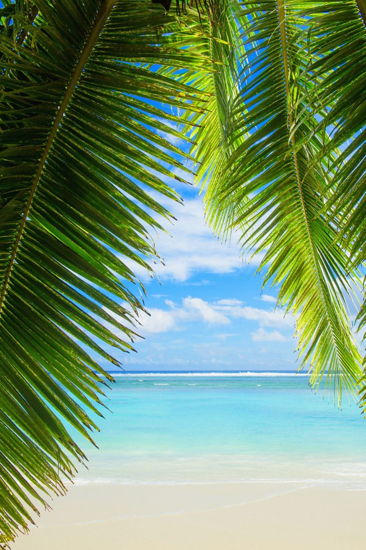 Photograph Palm tree leaves and tropical beach by Gable Denims on 500px