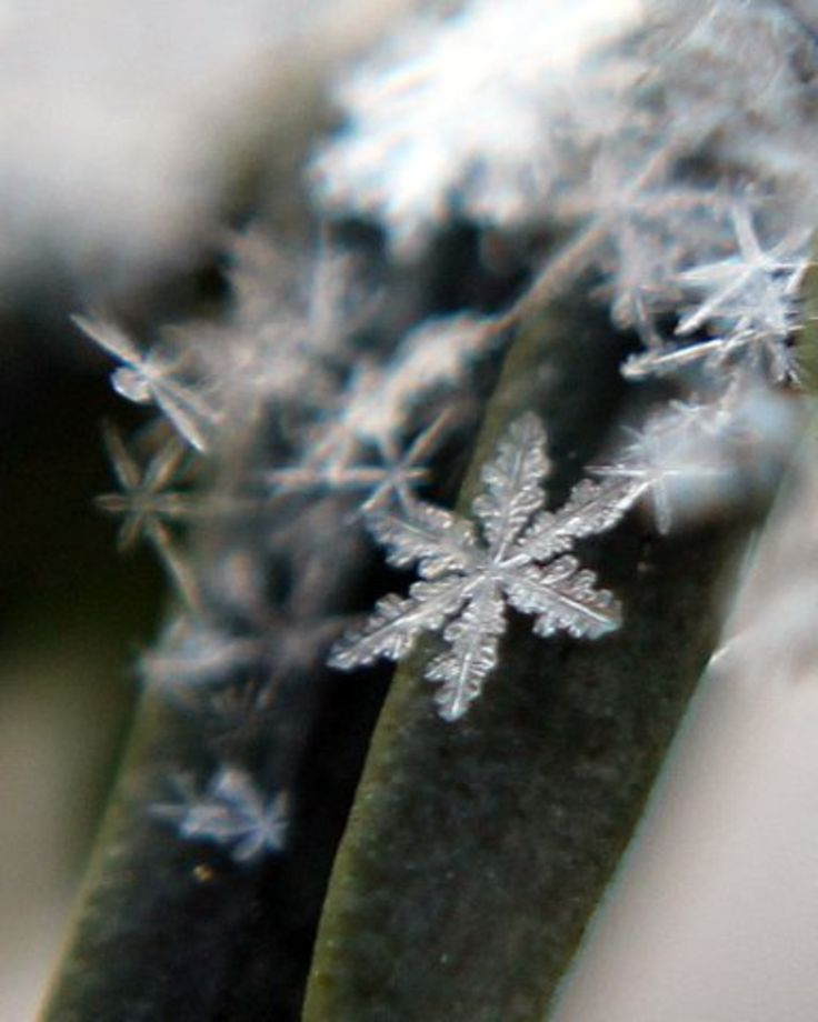 ♀ Snow Flakes by Jill Spriggs Bokeh photography