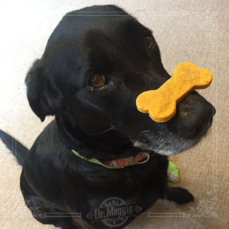 """""""Balance and cookies are the key to life."""" -Bella #balance #dogtreats"""