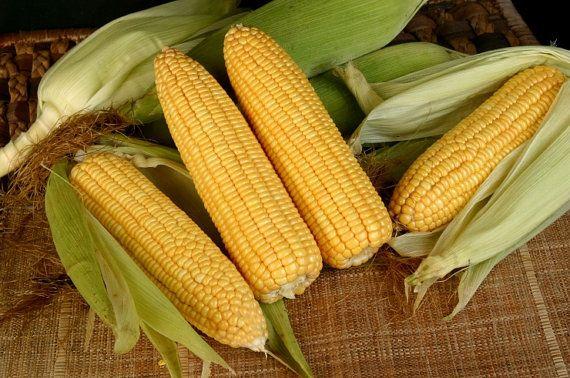 sweet corn 100 seeds corn seeds heirloom seeds by stseed on Etsy, $1.75