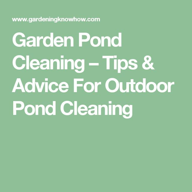 Best 25 Pond Cleaning Ideas On Pinterest