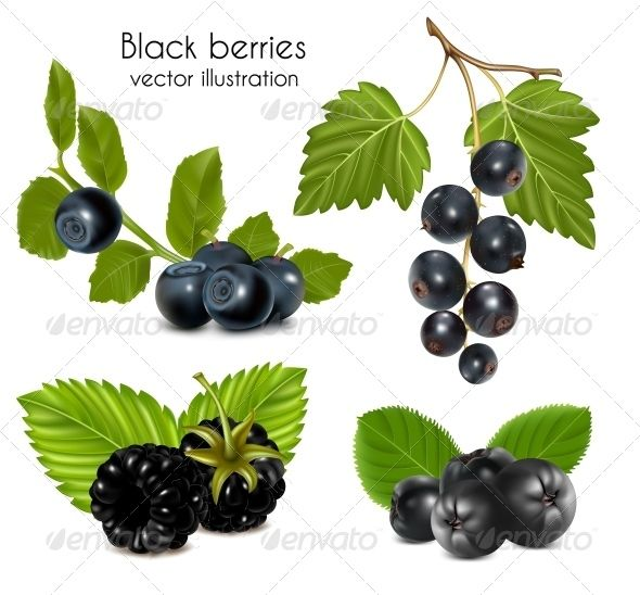 Set of Black Berries with Leaves  elements.