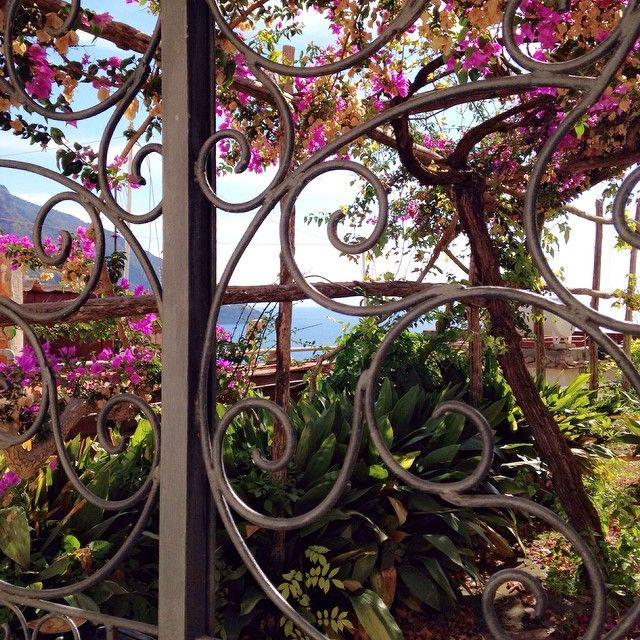 """Find more of my Italian pics by clicking on the fb link in my instagram's bio. /retrouvez mon album de photos Italiennes en cliquant sur le lien fb de ma page d'accueil instagram. #Italie #Italy #Amalficoast #Amalfi #secretgarden #jardincaché #bougainvillea #bougainvilliers #Mediterranean #Méditerranée #sea #wroughtiron #ferforgé  #portail #gate #South #Sud"" Photo taken by @aurelianeangel on Instagram, pinned via the InstaPin iOS App! http://www.instapinapp.com (10/23/2014)"