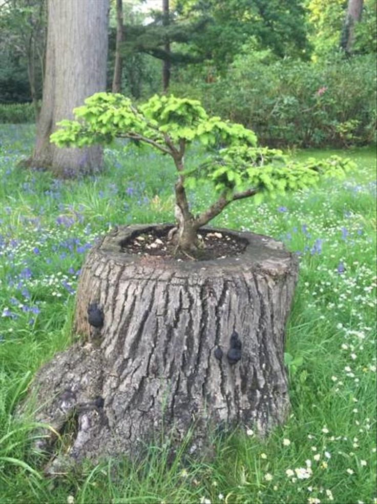 Tree planted in stump somewhat fittingly.