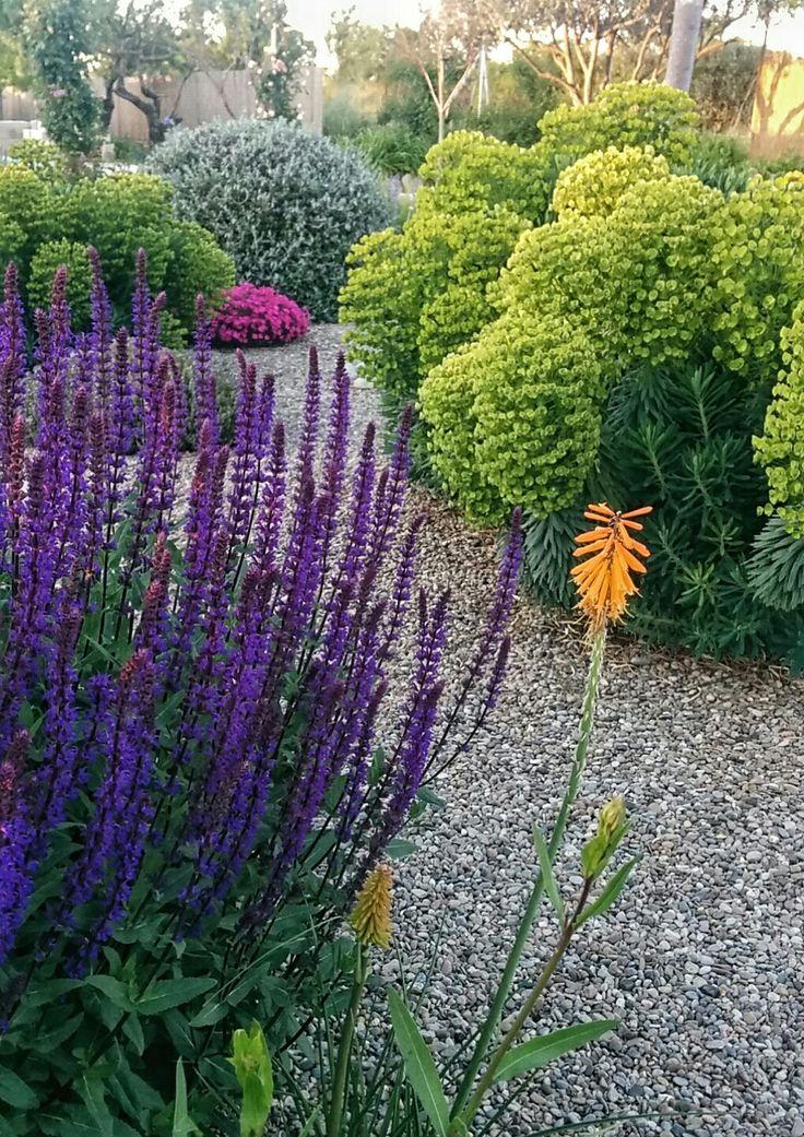 Salvia caradonna,  Kniphofia popsicle, Euphorbia wulfenii,  Dianthus kahori,  etc