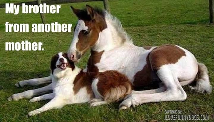 My brother from another mother. It doesn't matter what or who you are, you can always be friends. Although this combination is quite funny. #funnypet @PetPremium Pet Insurance Pet Insurance Pet Insurance