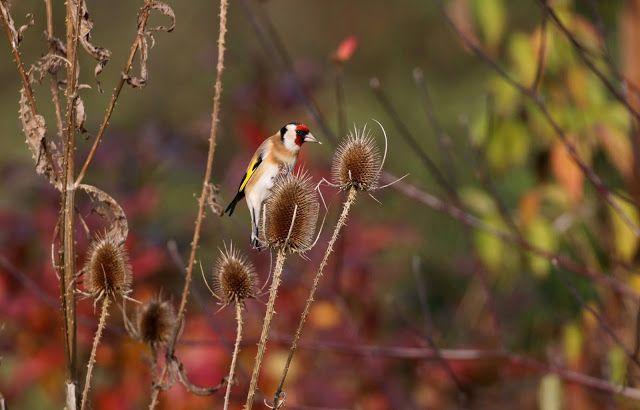 DEN PRO TEBE: STEHLÍK na štětce a podzimní slunečný den