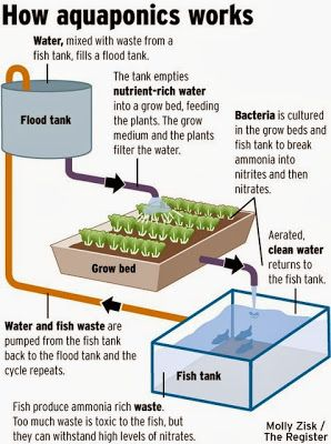 432 best homestead aquaponics images on pinterest for Hydroponic system with fish