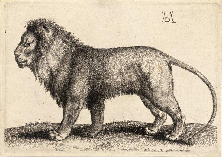 animal drawings of Albrecht Dürer
