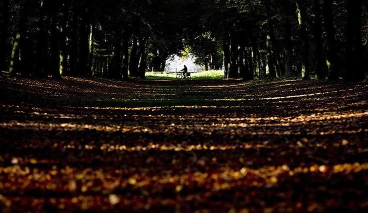 Autunno: corridoi  (Qualcuno in bicicletta, laggiù nella striscia di luce fra un mare di foglie, Bergen, Netherlands)  Ph: Koen Van Wee
