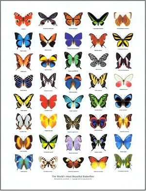 Add this Butterflies of the World poster to your collection for only $8.95!