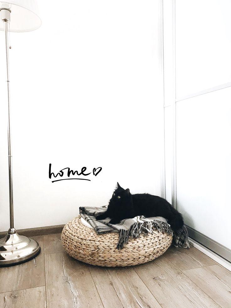 #home #blackcat #cat
