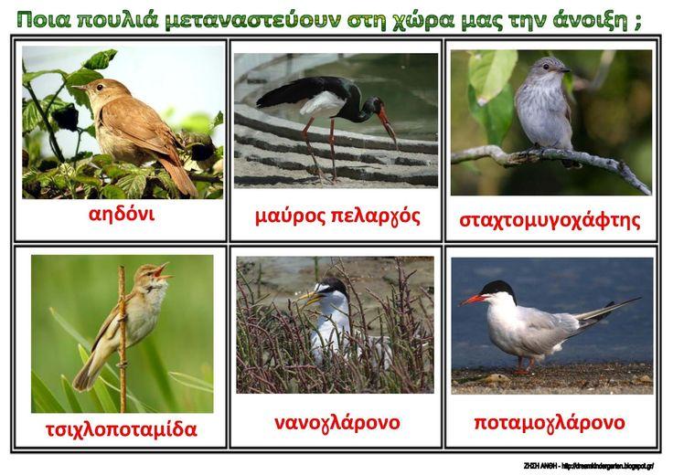 Τα αποδημητικά πουλιά που μας επισκέπτονται την άνοιξη - Λίστες αναφοράς για το νηπιαγωγείο .