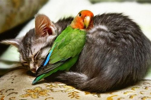 This kitten and bird are the best of friends. It's a reminder that, despite differences, we can all get along! #Friendship
