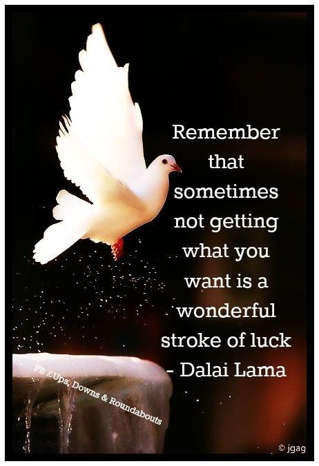 """""""Remember that sometimes not getting what you want is a wonderful stroke of luck."""" ~ Dalai Lama"""