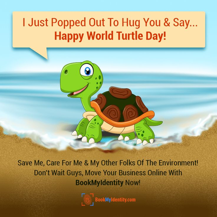 Happy Turtle Day From BookMyIdentity Team!   Hello Folks, Its Me, The Turtle, I Have Come Out To Say- Save Me & Help Save The Earth! Move Business Online With BookMyIdentity & Contribute!  https://www.bookmyidentity.com/
