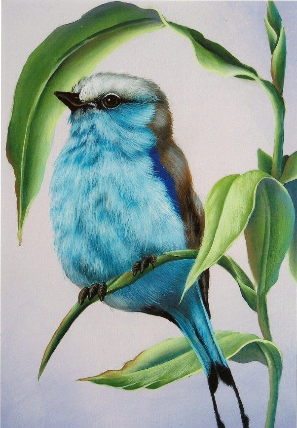 amazing colored pencil bird more - Color Drawings