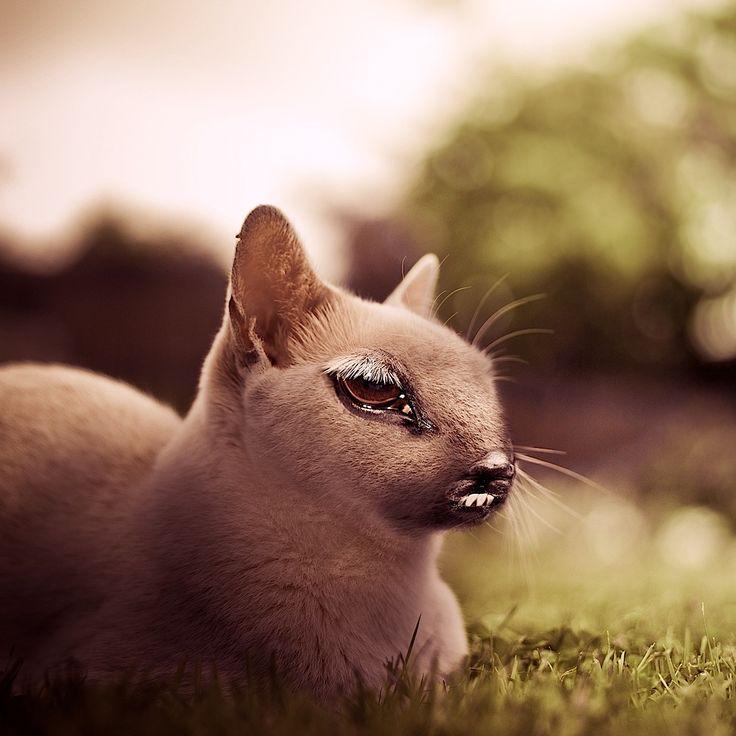 Hybrid cat ►CubaGallery
