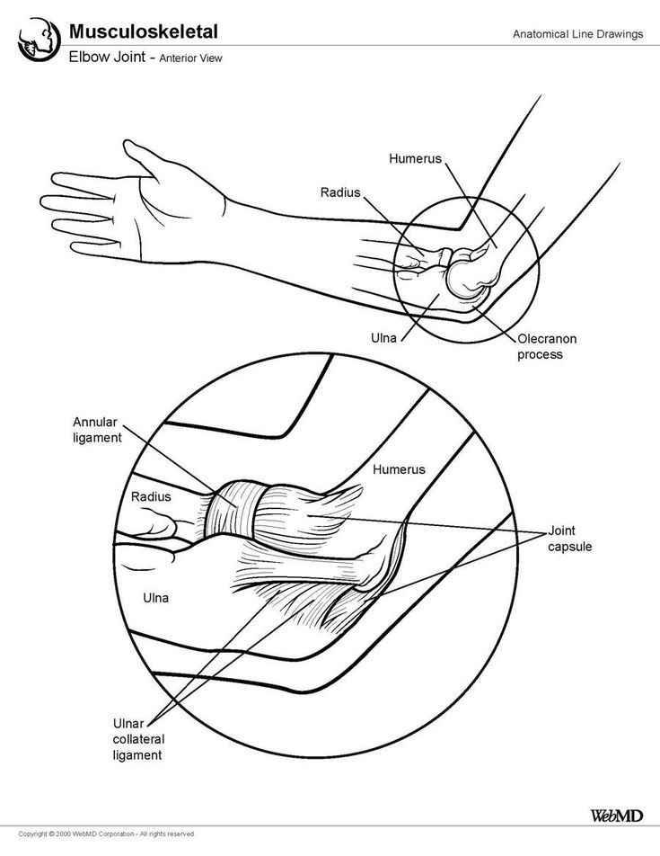 Elbow Joint Anatomy: Overview, Gross Anatomy, Other ...