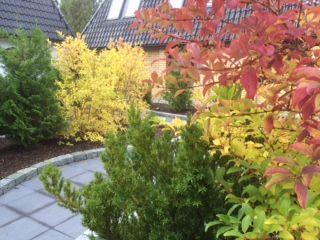 Our Atrium garden. Beautiful fall colours.