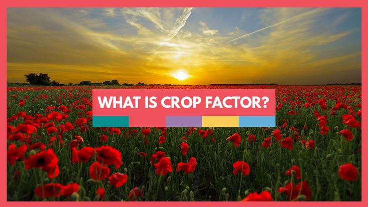 A Photography Guide to Crop Factor  You may have come across the term 'crop factor' before, but not been too sure what it means, or even why it's important. In this article, I'll attempt to explain the differences that full-frame or crop sensors make to your images.    If you're