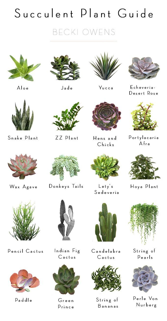BECKI OWENS- Styling Tip: Adding Greenery with Succulents + Succulent Plant Guide