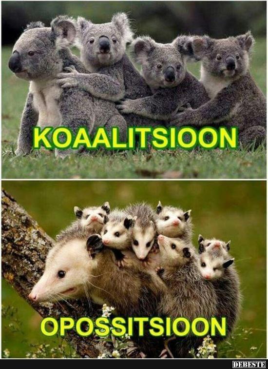 Koaalitsioon / Opossitsioon.. | Lustige Bilder, Sprüche, Witze, echt lustig