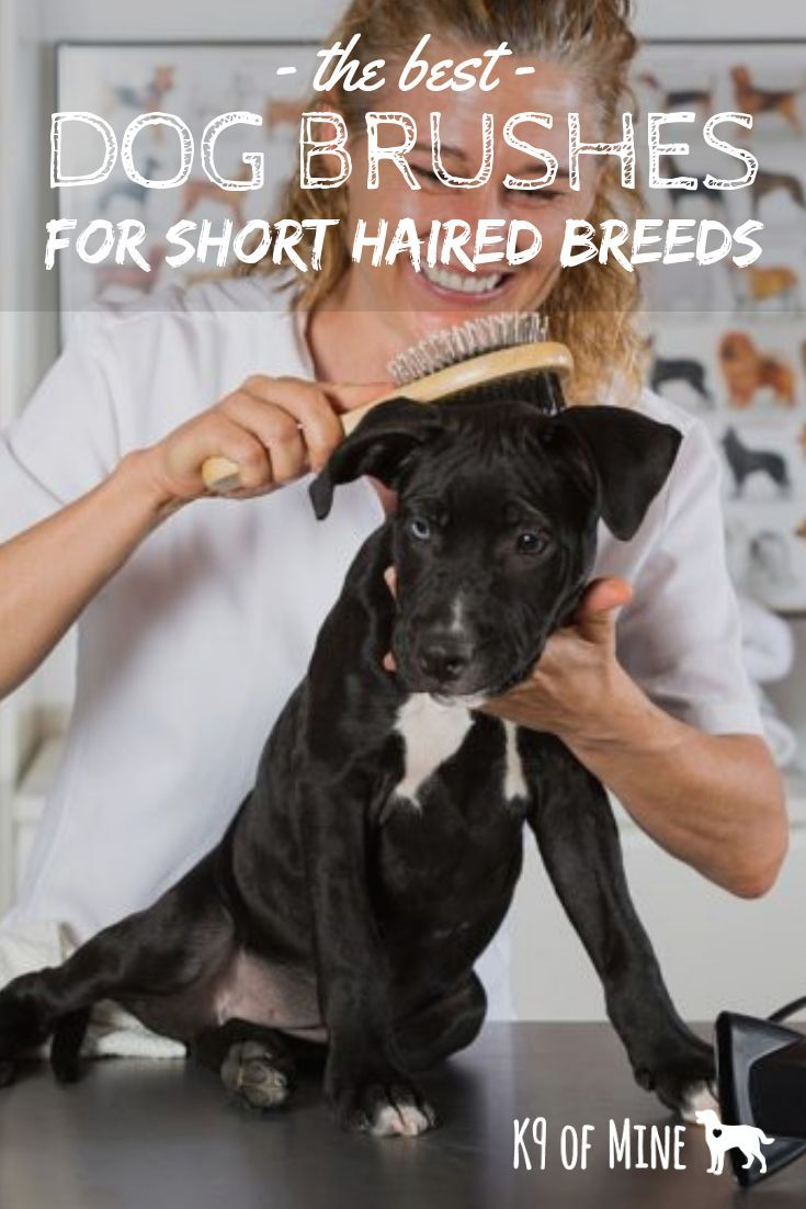 5 Best Brushes For Dogs With Short Hair 2020 Reviews Bristled