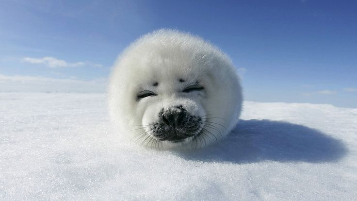 Petition · Ban trophy hunting of seals · Change.org