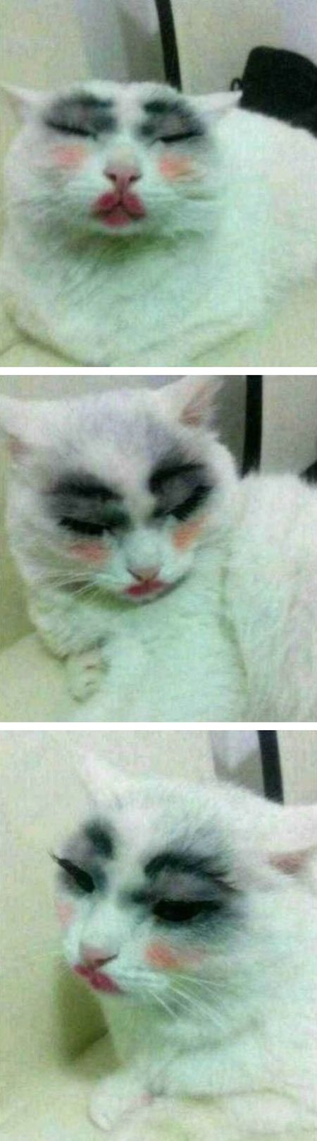 funny-cat-makeup-eyes