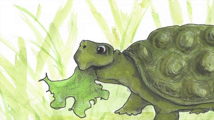 Schildpad zoekt een huis