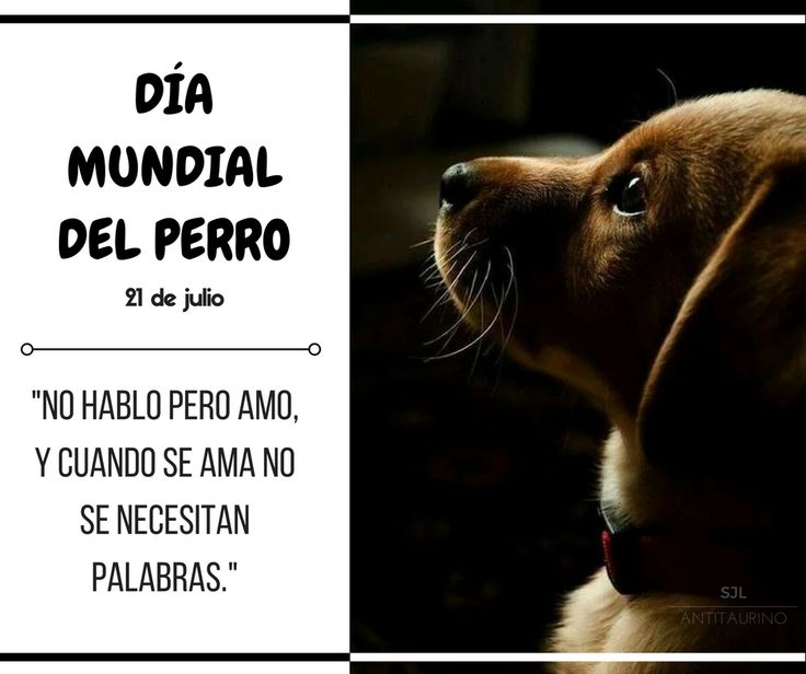 Dia Mundial del Perro https://www.facebook.com/SJLantitaurino/