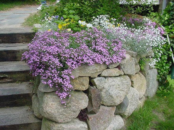 east sandwich ma green briars wildflower garden thornton w