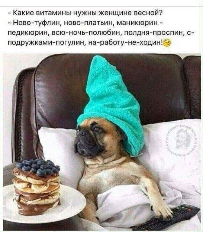 доброе утро смешные животные с цитатами открытка