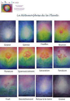 La métamorphose de la plante - http://www.en-vie-de-couleurs.fr/