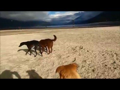 At the Lake with my dog friends