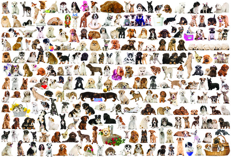 EuroGraphics The World of Dogs 2000-Piece Puzzle. A delightful collection of the various breeds of man's best friend.