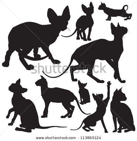 Black Cat P  Fd