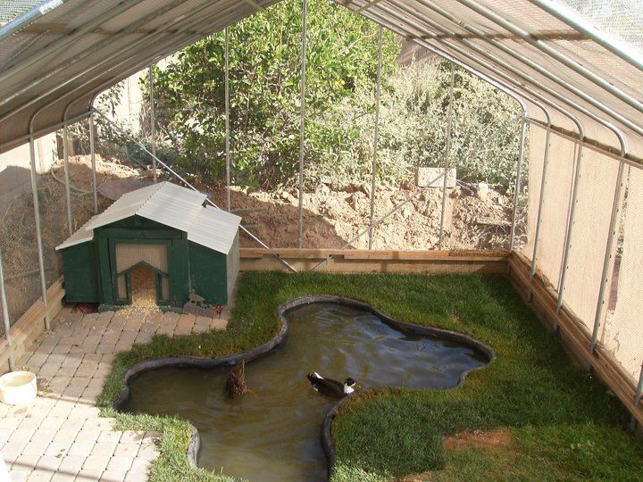 Predator Proof Housing -- this is an amazing duck habitat!