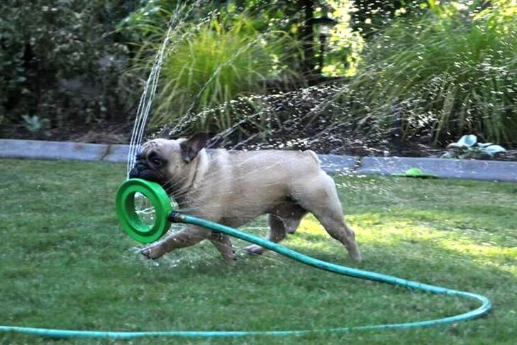 Can Dogs Drink Too Much Water The Dangers Of Water Intoxication