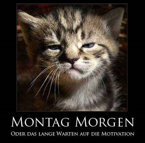 http://gbpics.to/gbpics/montag80.jpg