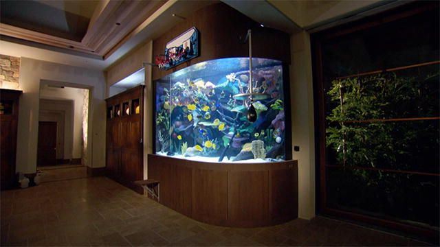 17 best images about fish tanks on pinterest fish for Fish furniture outlet