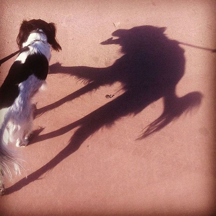 Wolf Or Dog?! The 12 Most Awesome Shadow Illusions Ever Captured – BoredBug