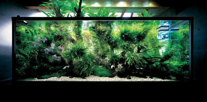Nature Aquariums and Aquascaping Inspiration You must click on the pic for much, much more!
