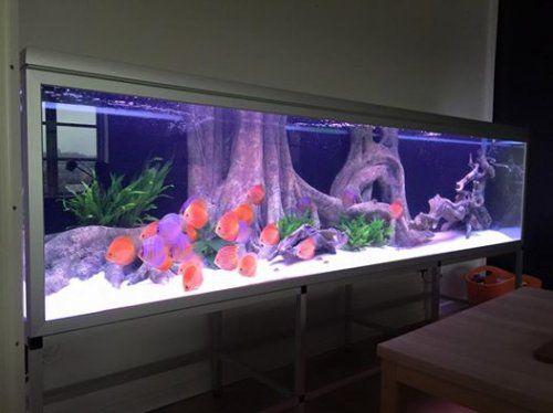 Diskuszucht stendker gmbh co kg diskus diskusfutter for Diskus aquarium