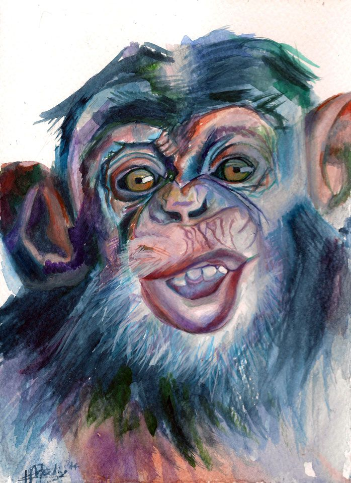 'Chimp' by Katharine Meeding Watercolour on paper 15cm x 21cm  R480