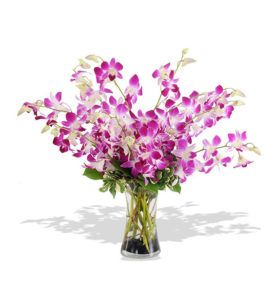 Looking for Online Bouquet delivery in Jalandhar? Look no further for kalpaflorist who enables you to send flowers in Jalandhar through the best florists in town!   Ph : 9216850252      To Buy This Product :  http://www.indiacakesnflowers.com/product/orchids-are-the-best/      website :http://www.indiacakesnflowers.com/  #flowerpointpunjab #sendflowersgiftsonlineindia   #flowershopjalandhar #localflowerdeliverypunjab   #flowerdeliveryinpunjab #onlineflowerdeliverytoindia