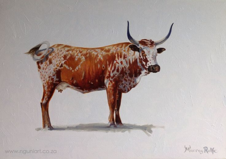 Nguni Cow, oil painting by Murray www.nguniart.co.za