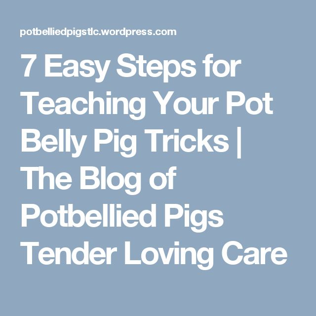 7 Easy Steps for Teaching Your Pot Belly Pig Tricks | The Blog of Potbellied Pigs Tender Loving Care