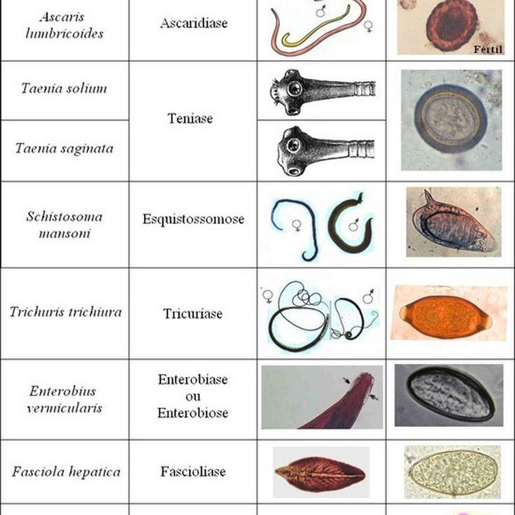 9 mejores imágenes de Biomedicina en Pinterest | Microscopio ...